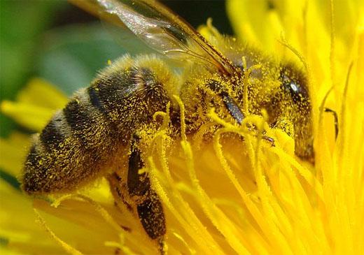Arıların Hayatımızdaki Önemi