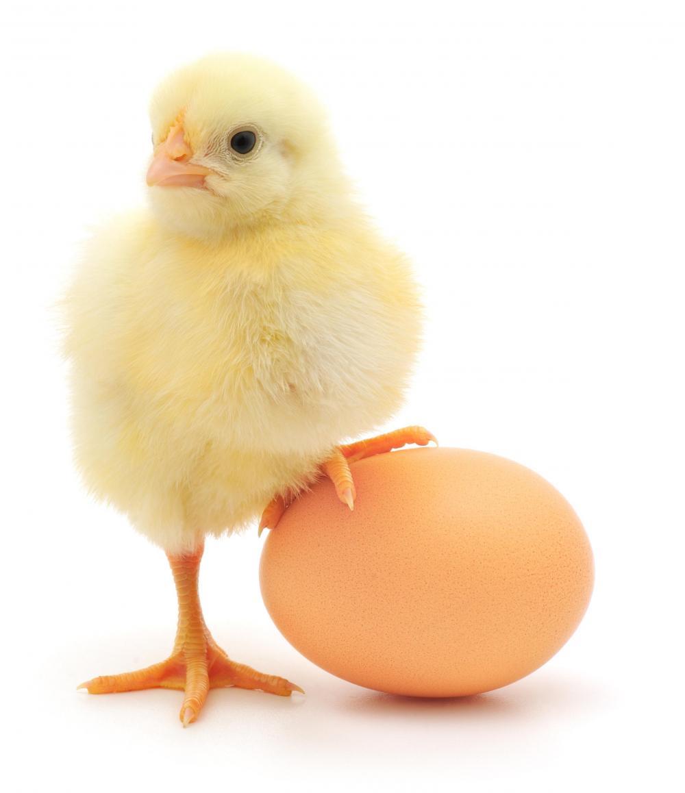 Yumurtayla Zayıfla