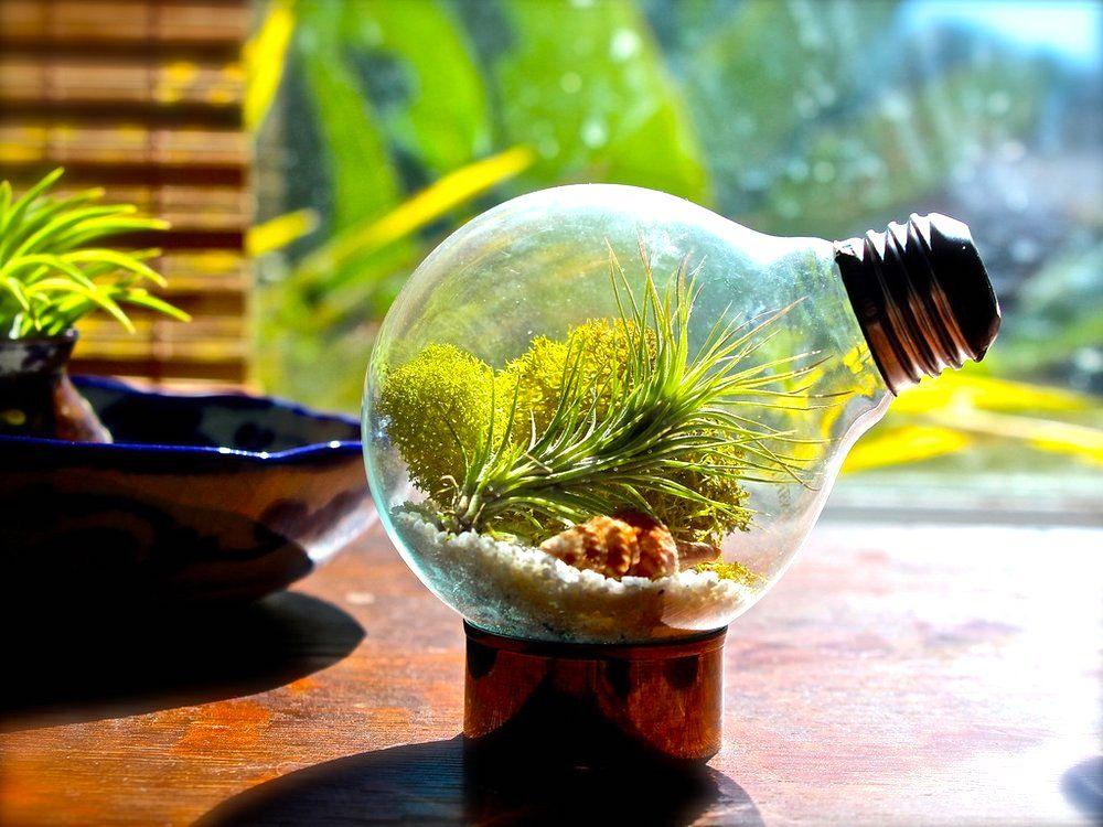 Kendi Minyatür Teraryum Bahçenizi Yapmaya Ne Dersiniz?